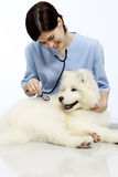 Smiling Veterinarian examining dog on table in clinic Stock Image