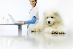 Smiling Veterinarian examining dog on table with computer in vet Stock Photos