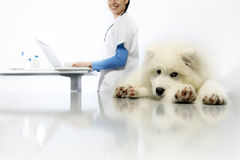 Smiling Veterinarian examining dog on table with computer in vet Stock Image