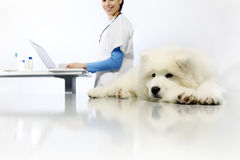 Smiling Veterinarian examining dog on table with computer Royalty Free Stock Images
