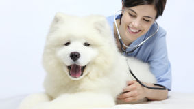 Smiling Veterinarian examining dog on table Royalty Free Stock Images