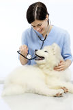 Smiling Veterinarian examining dog on table in vet clinic Stock Photo