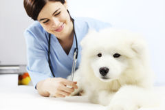 Smiling Veterinarian examining dog on table in vet clinic Stock Photos