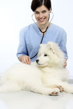 Smiling Veterinarian examining dog on table in vet clinic Royalty Free Stock Image