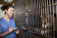 Smiling Veterinarian filling out medical chart Stock Image