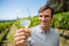 Smiling vintner examining glass of wine Stock Images