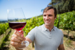 Smiling vintner examining glass of wine Royalty Free Stock Photography