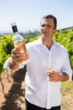 Smiling vintner examining wine Royalty Free Stock Photos