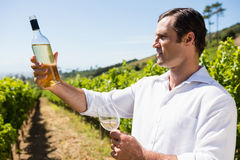 Smiling vintner examining wine Royalty Free Stock Images