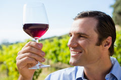 Smiling vintner holding glass of wine Royalty Free Stock Photos