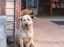 Smiling white stray homeless dog royalty free stock photo