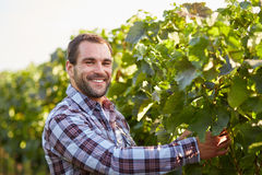 Smiling winemaker in the vineyard Royalty Free Stock Photos