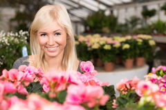 Smiling woman in florist shop. Smiling woman behind colourful flowers in florists greenhouse Royalty Free Stock Photography