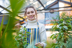 Smiling woman gardener standing in orangery Stock Photos