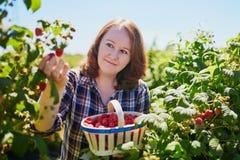 Smiling woman gathering ripe raspberries Royalty Free Stock Images