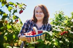 Smiling woman gathering ripe raspberries Stock Images