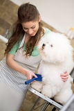 Smiling woman grooming bichon fries. In hair service Royalty Free Stock Photo