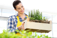 Smiling woman holding a crate of aromatic herbs, working Royalty Free Stock Photography