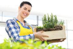 Smiling woman holding a crate of aromatic herbs, working Royalty Free Stock Images