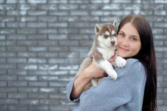 Smiling woman holding cute husky puppy royalty free stock images