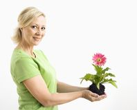 Smiling woman holding gerber daisy. Royalty Free Stock Photo