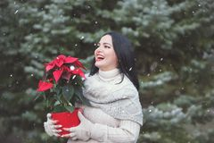 Smiling Woman Holding Pot With Christmas Red Poinsettia Plant. Outdoor. Selective on woman stock photo