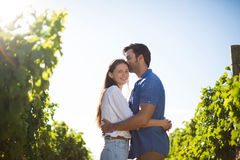 Smiling woman hugging boyfriend amidst plants at vineyard. During sunny day Royalty Free Stock Photos