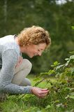 Smiling woman picking berries in the woods Royalty Free Stock Image