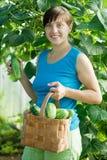 Smiling woman picking cucumber Stock Photo