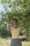 Smiling woman picking organic apples Royalty Free Stock Photo