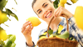 Smiling woman picks a lemon and put it in the basket Royalty Free Stock Photo