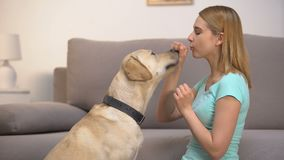 Smiling woman playfully giving dog kibble of food for good behavior, pet praise. Stock footage stock footage