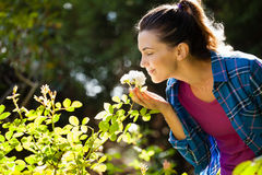 Smiling woman smelling roses at backyard Stock Photography