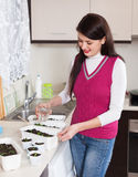 Smiling woman watering seedlings Stock Photography