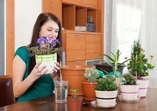 Smiling woman working with  viola flowers Royalty Free Stock Images