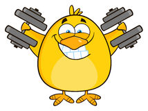 Smiling Yellow Chick Cartoon Character Training With Dumbbells Stock Photos