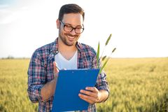 Smiling young agronomist or farmer inspecting wheat field before the harvest, writing data to a clipboard stock images