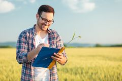 Smiling young agronomist or farmer measuring wheat plant size in a field, writing data into a questionnaire royalty free stock photos