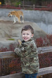 Smiling Young Boy at the Zoo. Photo of a young boy visiting the zoo for the first time. In the background is a blurred image of a Siberian Tiger Stock Images