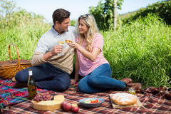 Smiling young couple toasting wineglasses on picnic blanket Stock Photos