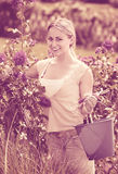 Smiling young female working with bush roses with horticultural. Tools in garden on sunny day Royalty Free Stock Images