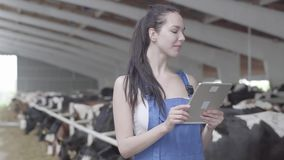 Portrait young confidient girl farmer making a tour of the barn with cows on the farm recording testimony on tablet. Smiling Young girl farmer making a tour of stock video footage