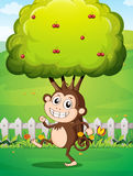 A smiling young monkey near the fence with a tree Stock Images