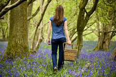 A smiling young woman carrying a wicker basket in a field of bluebells Stock Images