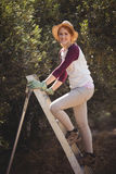Smiling young woman climbing on ladder at olive farm Stock Images