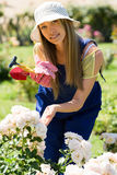 Smiling young woman in uniform working with roses Stock Image