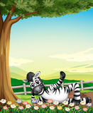A smiling zebra under the tree near the flowers Royalty Free Stock Images