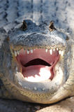 Smilleing Crocodile. A smilleing crocodile inviting to take a step towards his mouth stock photography