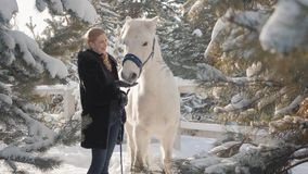 Smilling可爱的白肤金发的冲程和饲料她的手在一个多雪的国家大农场的一个美丽的白马 马的概念 影视素材