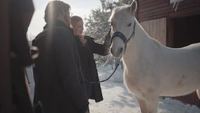Smilling blond woman and tall bearded man standing with white horse at the snow winter ranch. Girl strokes animal. Happy. Smilling blond woman and tall bearded stock footage